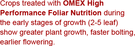 Crops treated with OMEX High Performance Foliar Nutrition during the early stages of growth (2-5 leaf) show greater plant growth, faster bolting, earlier flowering and improved maturity.