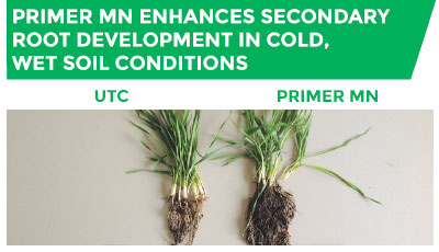 Primer Mn enhances secondary root development in cold, wet soil conditions