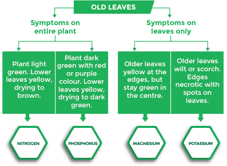 Diagram Showing That Deficiencies In Various Nutrients Can Present Symptoms On A Crop S Old Leaves