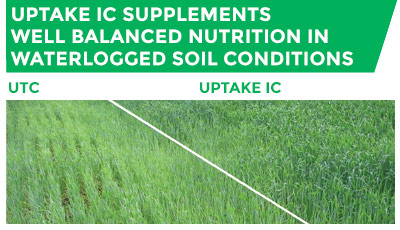 uPtaKe IC supplements well balanced nutrition in waterlogged soil conditions
