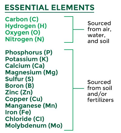 The Essential Elements Required To Grow A Crop And Their Sources
