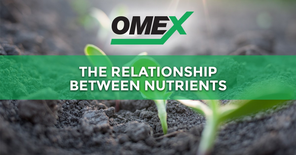 Graphic-2019-01-21-OMEX-SocialSharing-Nutrients