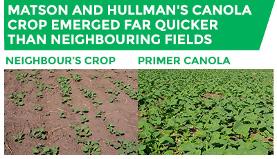 A photo comparison of two neighbouring crops, one untreated and one treated with OMEX Primer Canola. Matson and Hullman's canola crop (right) emerged far quicker than neighbouring fields