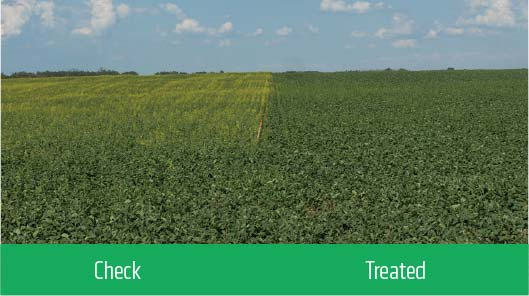 Check/Treated crop comparison.