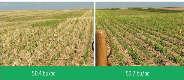 Check/Treated comparison at 50.4 bu/ac and 59.7 bu/ac.