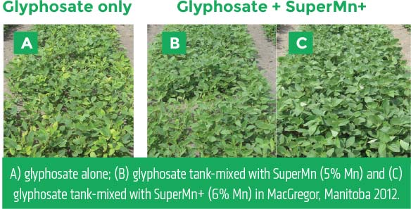 Comparison between using Glyphosate on its own, and with Super Mn+