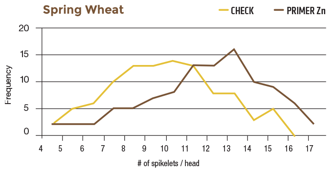 Comparison chart of Spring Wheat with Primer Zn and Check