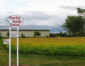 Purity Seeds Limited's yellow Soybean crops